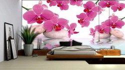 Beautiful pink orchid - 151