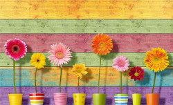 Gerbera flowers on a painted background - 3710