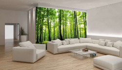 Green woods in the spring Wall Mural - 186