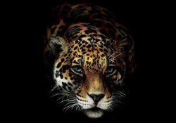 Panthera leopard wall mural - 10148