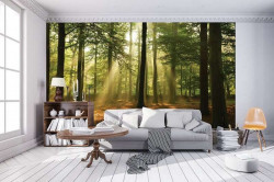 Sunbeams in the forest wall mural - 10331