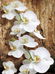 White orchids wall mural - 1017A