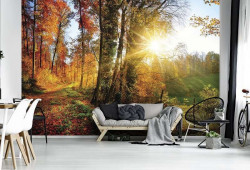 Colorful autumn forest at sunrise wallpaper - 12108
