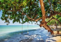 Cradle on a beach tree - 11850