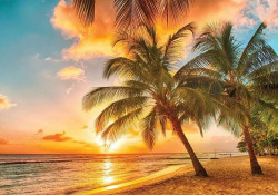 Palms on the beach at sunset, relaxing wall mural - 3393