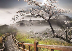 Early Spring blossomed tree wall mural - 12022