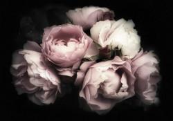 Dark theme flower photowall - 13299