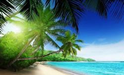 Green palms on a far-away beach, relaxing image - 736
