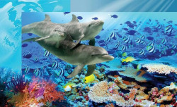 Sea life, underwater shot of dolphins and fish - 072