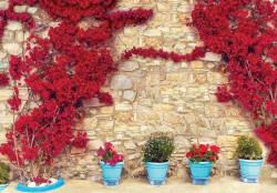 Stone wall climbing flowers -3579