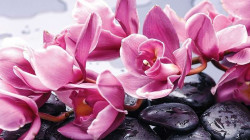 Zen wall mural with pink flowers - 1337