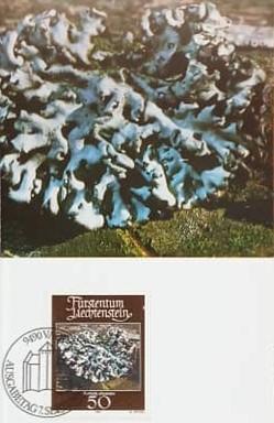 Liechtenstein 1981 - Lichen, Carte Maxima