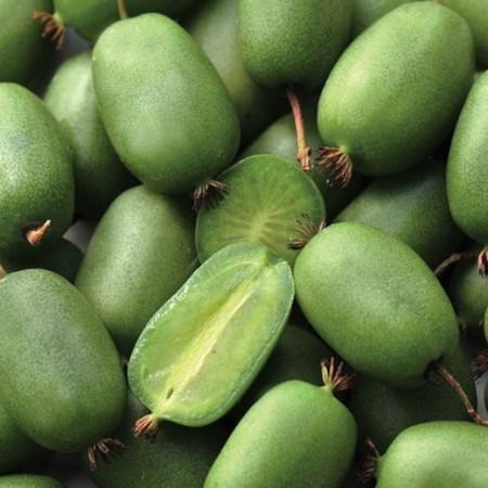 Mini kiwi Actinidia arguta Vitikiwi autofertil