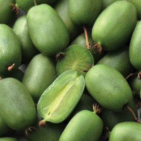 Mini kiwi Actinidia arguta Vitikiwi autofertil 80-100 cm