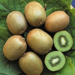 Kiwi Hayward clona 8 (actinidia deliciosa) femela