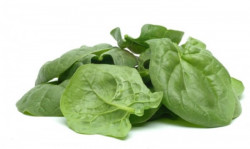 Fresh spinach Bulgaria