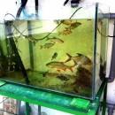 6 Acvarii + 6 Terarii (pentru specii în tranzit/teste)
