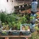 Mini: Permacultura +Hidro-Aquaponic +Solar