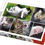Puzzle Trefl, Viata Pisicilor, 1500 piese