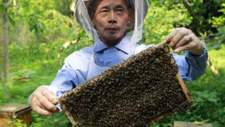 Pandemia de Coronavirus loveste puternic apicultura in China, un avantaj pentru apicultorii romani ?