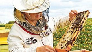 Bani pentru apicultori - Model cerere ajutor de minimis