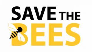 6 moduri simple de a ajuta la salvarea albinelor de la dispariție