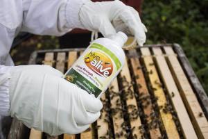 administrare hive alive la albine