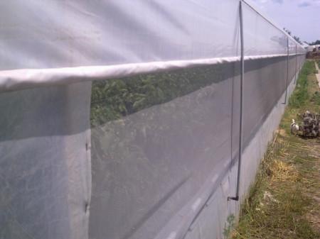 Plasa protectie contra insectelor 1*50 m