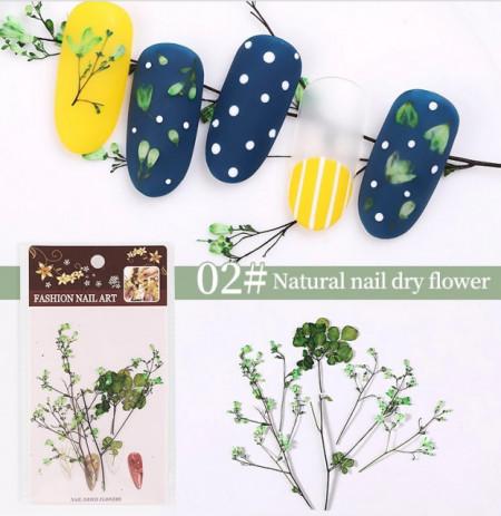 Set flori uscate 02 Green