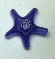 x112-51 Zeester transparant paars NIEUW *0D000