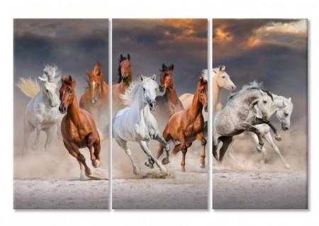 Multicanvas, Cai în mișcare.