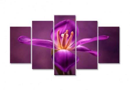 Multicanvas, Iris de culoare bordo