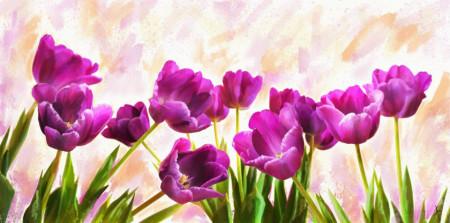 Multicanvas, Lalele roz