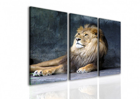Multicanvas, Leul pe un fundal albastru.
