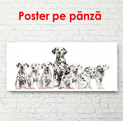 Poster, Câini dalmațieni pe un fundal alb