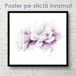 Poster, Floare albă cu contur violet