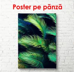 Poster, Frunze de palmier pe un fundal întunecat