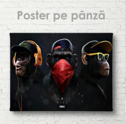 Poster, Maimuțe glam