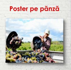 Poster, Oamenii culeg struguri