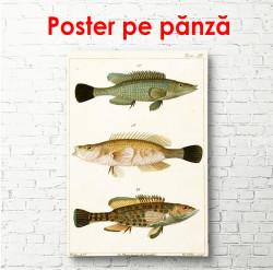 Poster, Pește pe un fundal bej