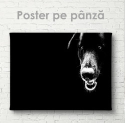 Poster, Câinele negru
