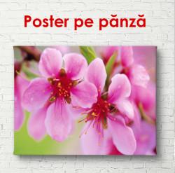 Poster, Flori de primăvară roz pe un copac