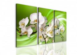 Tablou modular, Orhidee albă pe un fundal verde.