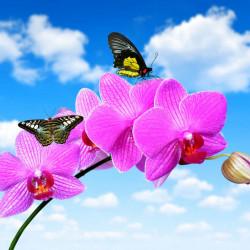 Tablou modular, Orhideea roz împotriva cerului