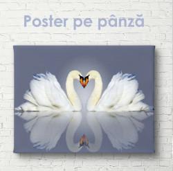 Poster, Două lebede