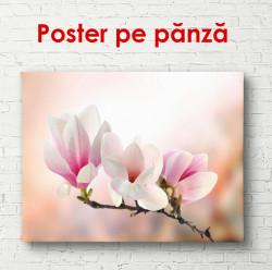 Poster, Magnolii delicate roz pe un fundal roz închis.