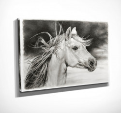Poster, Pictură de cal alb și negru