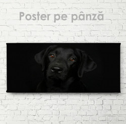 Poster, Privire blândă