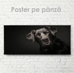 Poster, Câinele prieten