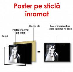 Poster, Cal alb pe un fond întunecat